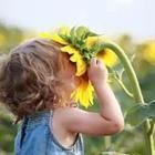 Little girl smelling large sunflower