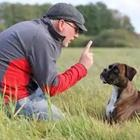 A man training his dog in the field