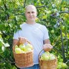 A man carrying two baskets of apples
