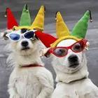 Dogs with sunglasses and hats