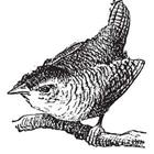 A drawing of a bird in black and white