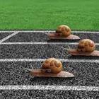 Snails on race track